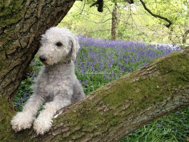 Top Five Things to do with your Dog