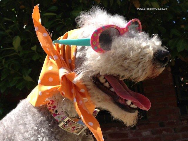 Looking Super Stylish in a BlossomCo Dog Bandana