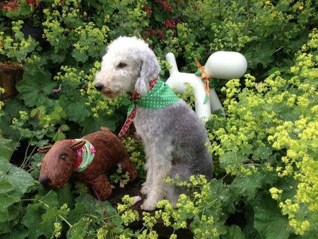 keeping cool with BlossomCo Dog Bandanas