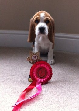 Mabel the prizewinner